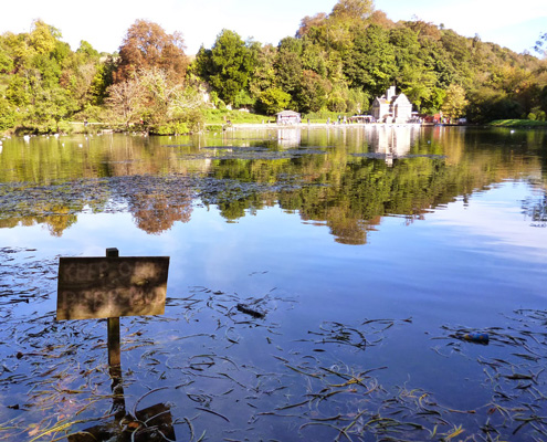 a summers day in swanbourne lake, Arundel